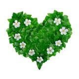 Modèle vert naturel de coeur fait de feuilles de lierre et fleurs blanches Configuration plate Photo stock