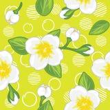 Modèle vert sans couture avec le jasmin de floraison image stock