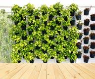 Modèle vertical de plante verte Photos libres de droits