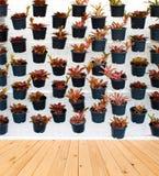 Modèle vertical de plante verte Photo libre de droits