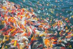 Modèles colorés de la natation d'écrevisses Photo stock