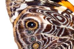 Modèles dans une aile de papillon Image stock