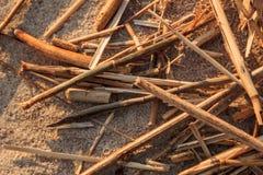 Modèles de plage Images stock