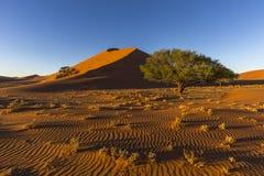 Modèles de sable dans la lumière de début de la matinée Photo libre de droits