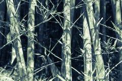 Modèles en bambou de verger Photographie stock libre de droits