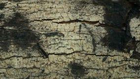 Modèles en bois de grain de fond Images libres de droits