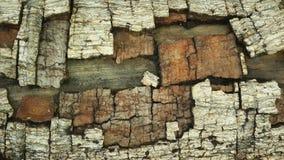 Modèles en bois de grain de fond Photo libre de droits