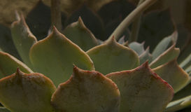 Modèles en nature Photographie stock libre de droits