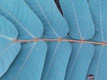 Modèles et textures des feuilles, feuilles dans les paires des deux côtés Ton de vintage photo libre de droits
