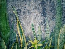Modèles et textures des murs et des plantes vertes Photographie stock