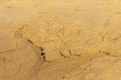 Modèles et textures naturellement formés sur le sable humide de plage Photographie stock libre de droits