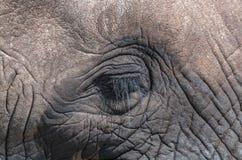 Modèles et textures ondulés sur la tête de l'éléphant africain Photo stock