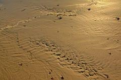 Modèles onduleux de sable en sable humide sur la plage image libre de droits