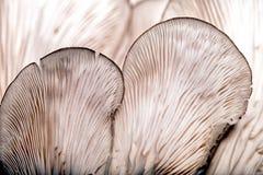 Modèles sur un champignon image stock