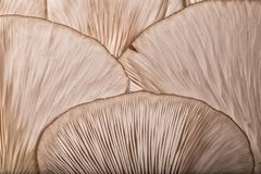 Modèles sur un champignon photos stock