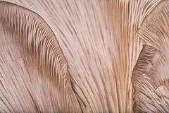 Modèles sur un champignon images stock