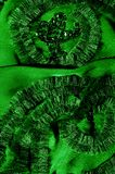 Modèles Vert Dégagez, mais souple, parce qu'il a un Wei plus léger Image libre de droits