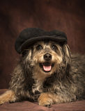 Mod dog. A hairy black and tan dog is posing and smiling in front of a dark reddish brown backdrop wearing a black newsboy cap Royalty Free Stock Photos