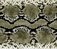 Mod?le d'or de peau de serpent Serpent de texture Copie ? la mode Mode et fond ?l?gant illustration libre de droits