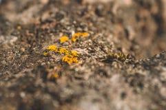 Mod?le de la mousse et du champignon de lichen s'?levant sur une ?corce d'un arbre dans la for?t image libre de droits