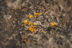 Mod?le de la mousse et du champignon de lichen s'?levant sur une ?corce d'un arbre dans la for?t photos stock