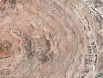 Mod?le en bois d'arbre images stock