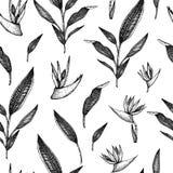 Mod?le sans couture de vecteur avec les fleurs tropicales illustration libre de droits