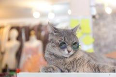 Moda del gato con los vidrios de sol Imagen de archivo