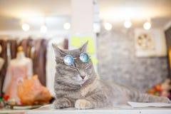 Moda del gato con los vidrios de sol Imagen de archivo libre de regalías