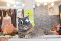 Moda del gato con los vidrios de sol Fotografía de archivo libre de regalías