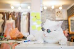 Moda del gato del vintage con los vidrios de sol Fotografía de archivo libre de regalías