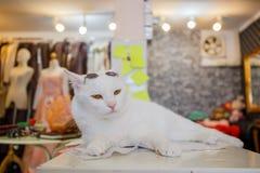 Moda del gato del vintage con los vidrios de sol Imagenes de archivo