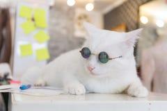 Moda del gato del vintage con los vidrios de sol Fotos de archivo libres de regalías
