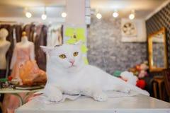 Moda del gato del vintage con los vidrios de sol Imágenes de archivo libres de regalías