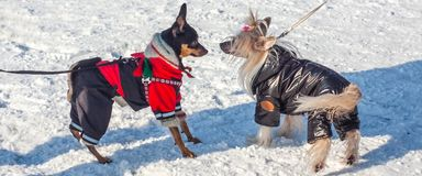 Moda dla zwierząt Fotografia Royalty Free