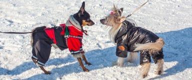 Moda para los animales Fotografía de archivo libre de regalías