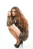Moda portret młoda brunetki dziewczyna w lampart sukni Obraz Royalty Free