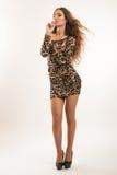 Moda portret młoda brunetki dziewczyna w lampart sukni Obraz Stock