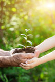 Młoda roślina w rękach przeciw zielonemu wiosny tłu Zdjęcia Stock