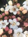 Modalità macro per i piccoli fiori Immagine Stock