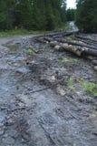 Modderige bosweg Stock Afbeelding