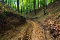 Modderige bosweg in de herfst in ravijn Royalty-vrije Stock Foto's