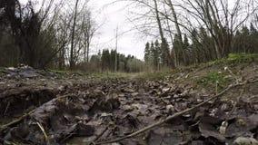 Modderige bosweg Vuile bosweg stock footage