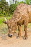 Modderige buffels. Stock Afbeeldingen