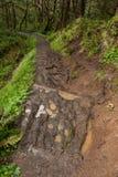 Modderige geërodeerder sleep, Oregon stock foto