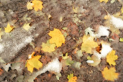 Modderige grond met gevallen bladeren en sneeuw Royalty-vrije Stock Foto