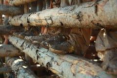 Modderige laarzen Stock Afbeeldingen