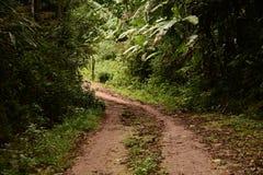 Modderige manier binnen mistig bos Stock Foto