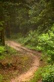 Modderige manier binnen mistig bos Royalty-vrije Stock Foto's