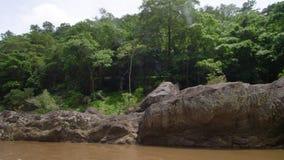 Modderige rivier in het midden van het hout stock video